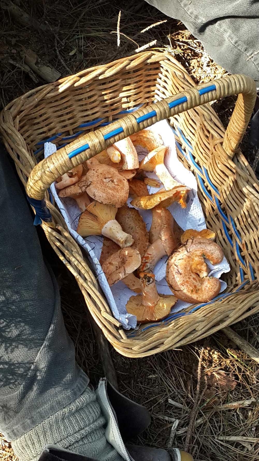 Delheim Mushroom Forage
