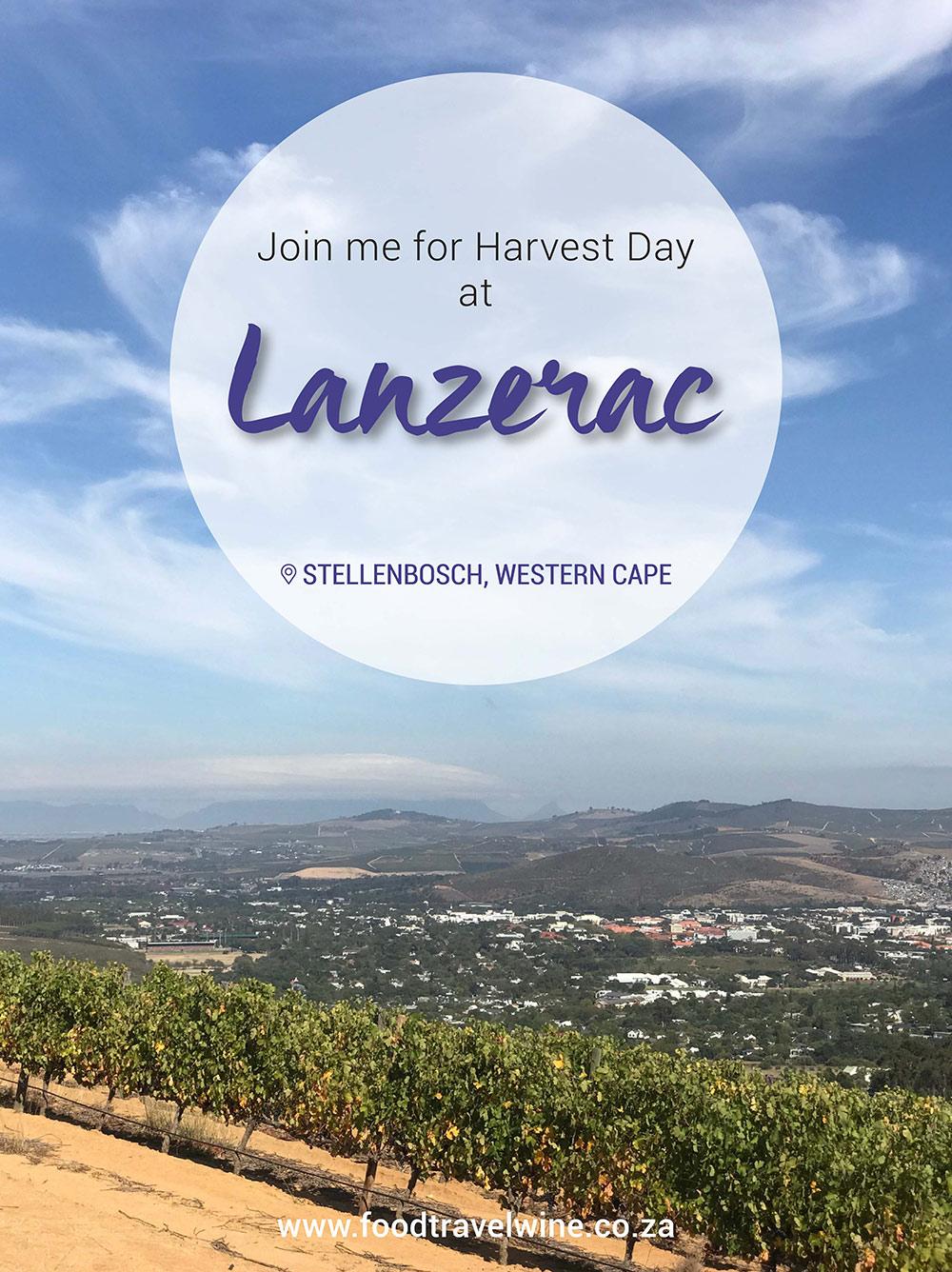 Lanzerac Harvest Day