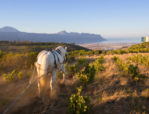 False Bay Vineyards, by Waterkloof Wines, introduces their new Revenant Red.