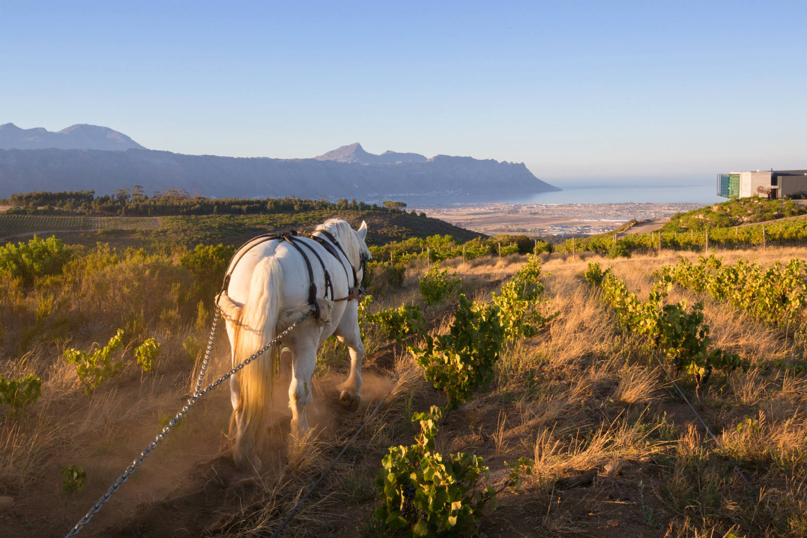 Waterkloof is well known for their approach to biodynamic farming and sweeping views of False Bay.